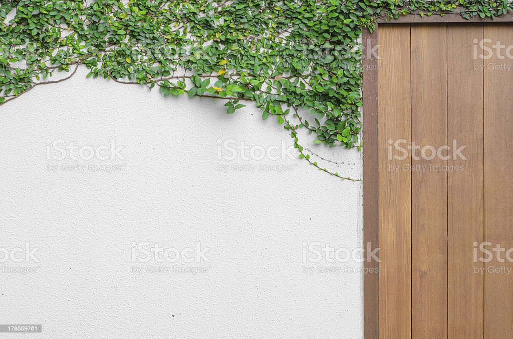 Ivy on a white wall With  wooden gate royalty-free stock photo