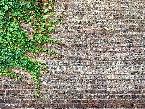 Boston Ivy on old brick wall.   iPhone