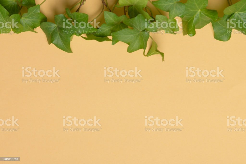 ivy on color paper stock photo