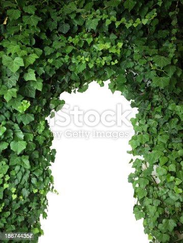 istock ivy 186744357