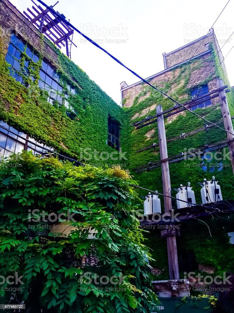 Ivy Walls On A Tall Brick Apartment Building Royalty Free Stock Photo