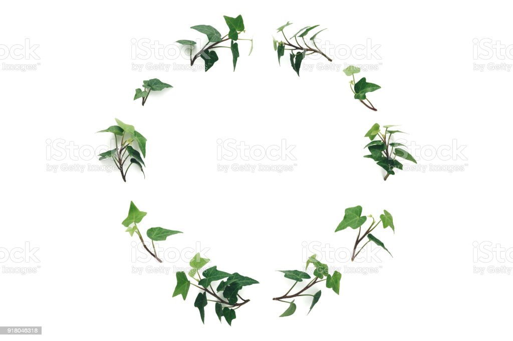 ivy wreath on white background stock photo more pictures of above