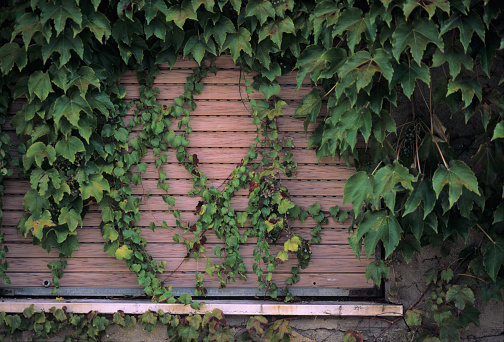 Ivycovered Window Closed With A Rolling Shutter - Fotografie stock e altre immagini di Architettura