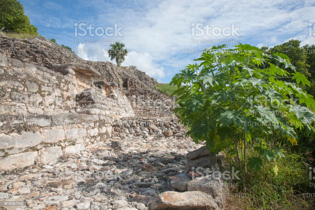 Izamal: Kinich Kak Moo Stones and Trees 3 stock photo