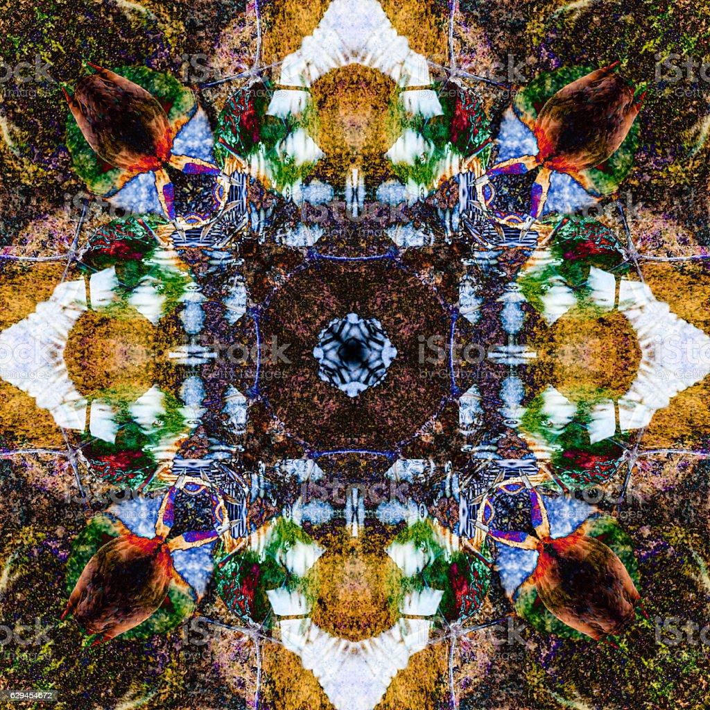 jacana abstract 1 stock photo