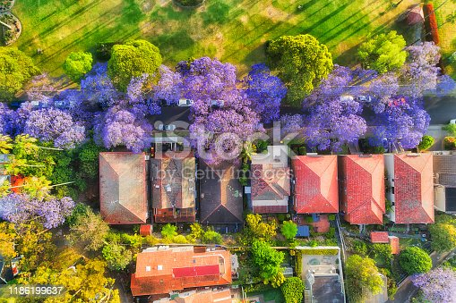 Leafy street in Kirribilli residential wealthy suburb of Sydney during spring season when Jacaranda trees are blossoming and covered by violet flowers. Aerial top down view over street, houses and green park.