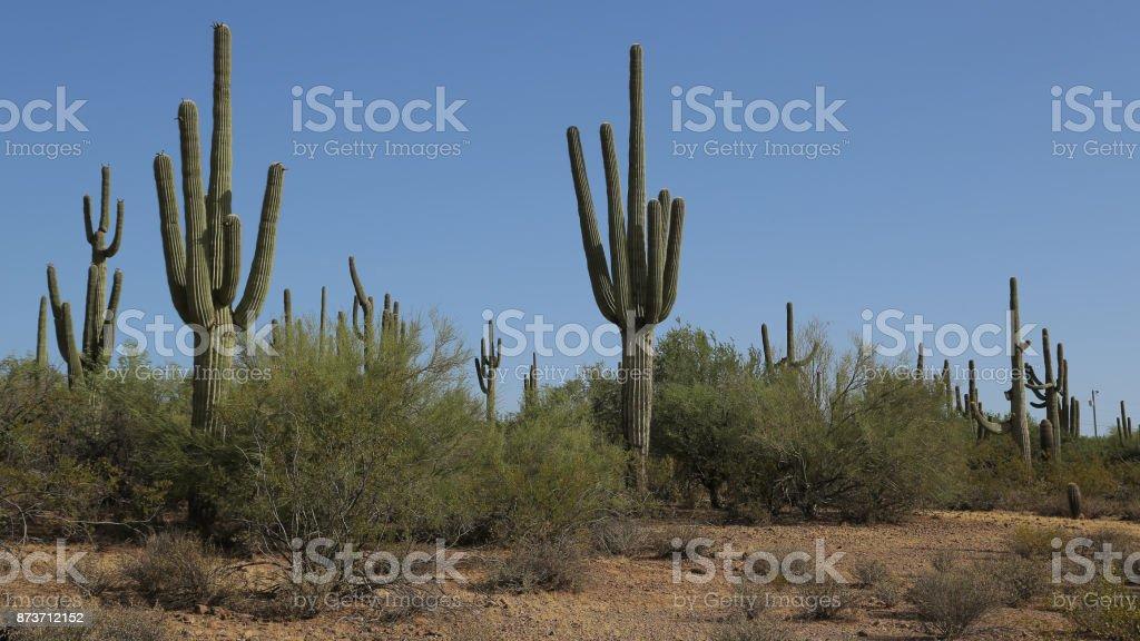 Jack Ass Acres stock photo