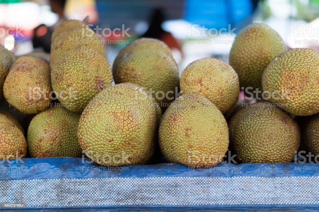Jack fruit or moraceae stock photo
