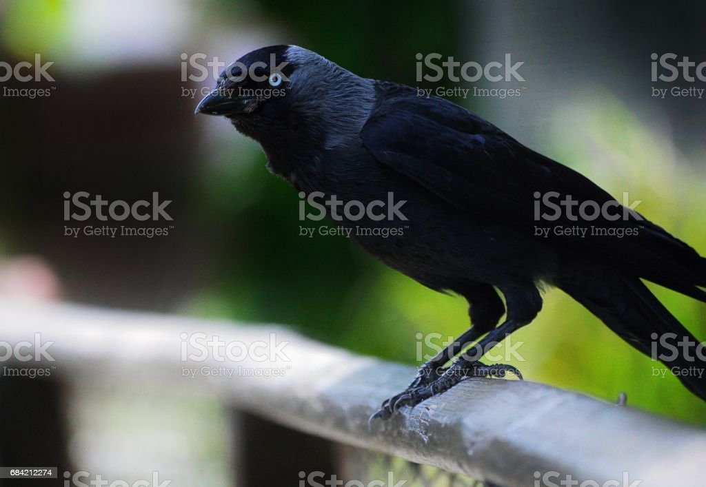 Jack royalty-free stock photo