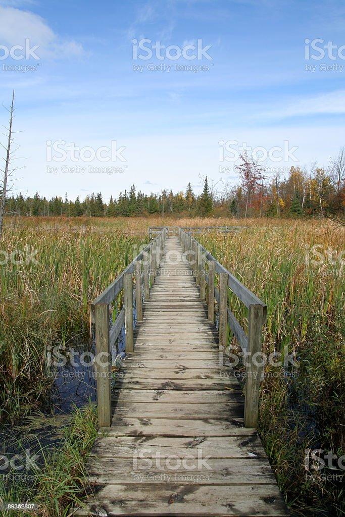 Jack Pine Trail Boardwalk royalty-free stock photo