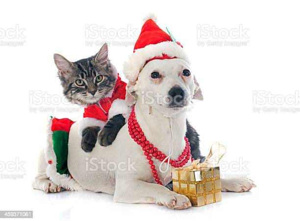 Jack russel terrier and kitten picture id459371061?b=1&k=6&m=459371061&s=612x612&h=wgpnsfxkfbgh1hqzupvxv2lmpjmcxsxxb09f3iqkzki=