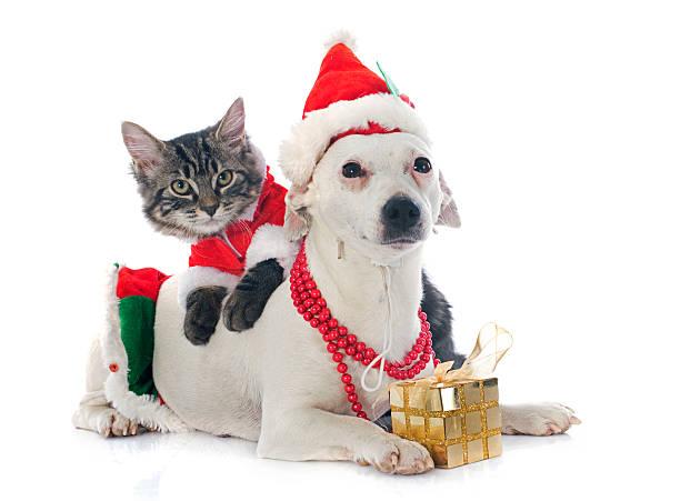 Jack russel terrier and kitten picture id459371061?b=1&k=6&m=459371061&s=612x612&w=0&h=xespcoxl77alnzyy1sttl722eybs9c124wp8rwcwmpw=