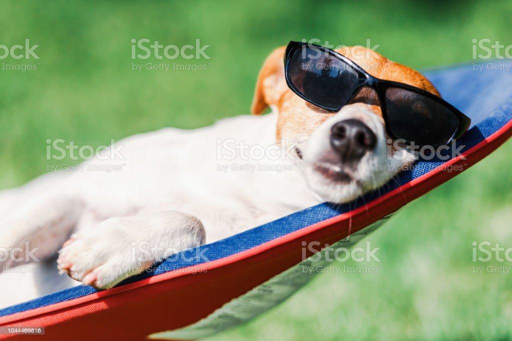 Perro de Jack Russell terrier se encuentra en una silla de cubierta foto de stock libre de derechos