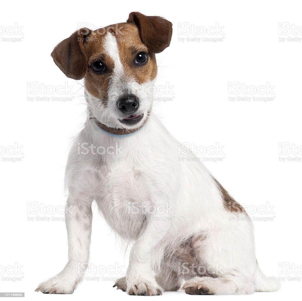 National Dog Show  Pug