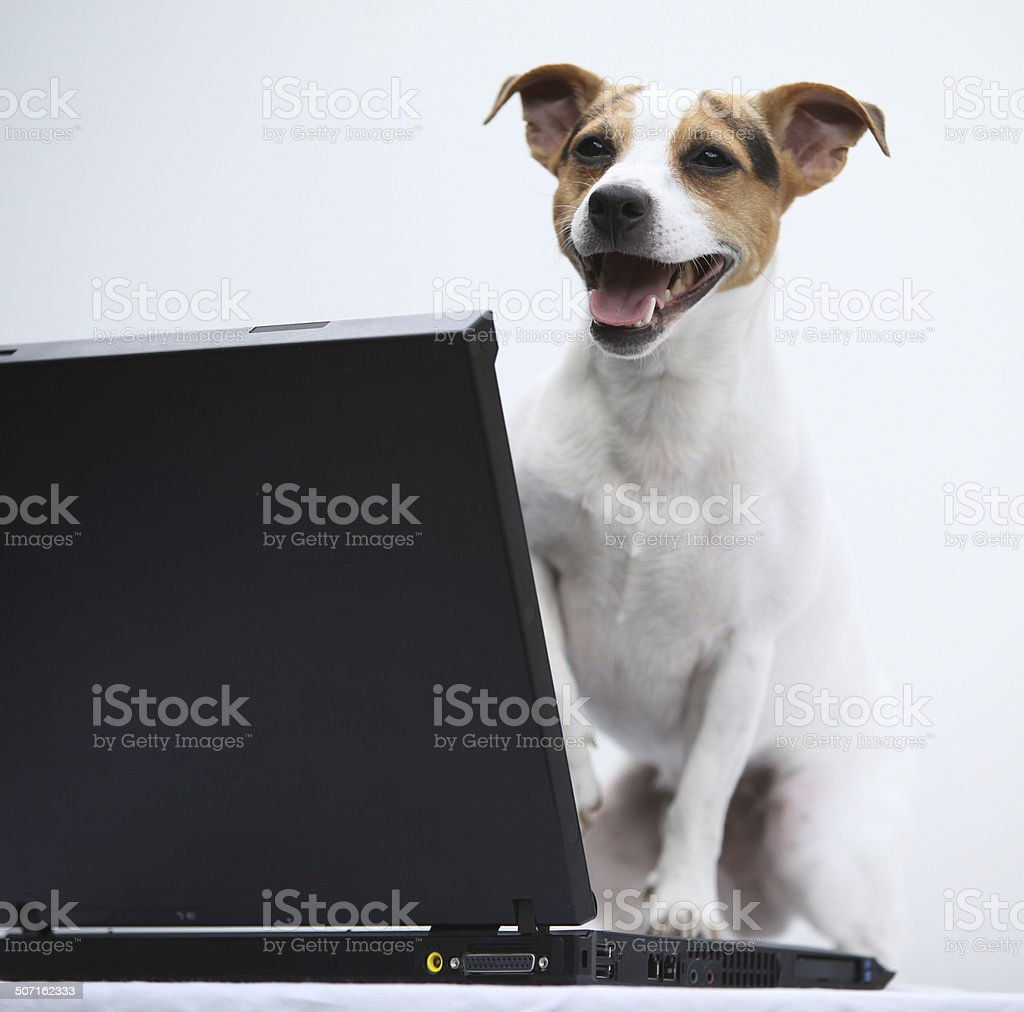 Jack russell terier with notebook royalty-free stock photo