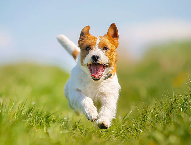 Royalty Free Dogs Pictures, Images and Stock Photos - iStock