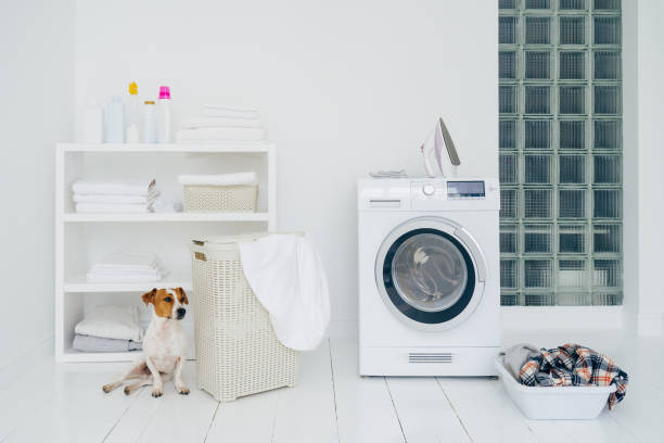 Jack russell terrier in bathroom with washing machine, basket with laundry, shelf with folded linen and bottles with detergent, white walls. Dog proofing bathrooms and laundry rooms.