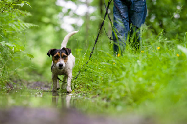 Jack Russell terrier in park with water, beautiful blurry colors