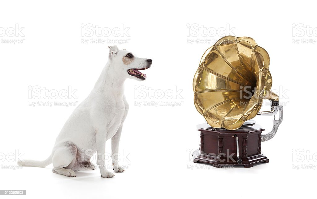 Jack Russell Terrier sitting next to gramophone stock photo