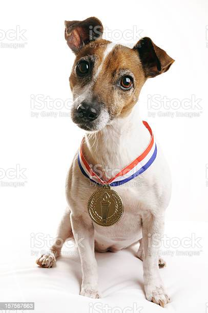 Jack russell terrier with gold medal picture id157567663?b=1&k=6&m=157567663&s=612x612&h=tr qawphx64ftce1tnm c4orhmtgpuqlahoajni3zym=
