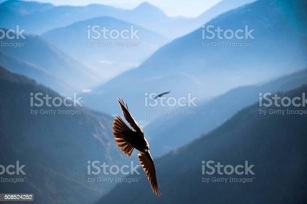 Jackdaw flying over the mountains of bavaria picture id508524252?b=1&k=6&m=508524252&s=612x612&h=xdtlfnzokpavp6hlnbuz0ldv26zf23u9rhe8z3ac64s=