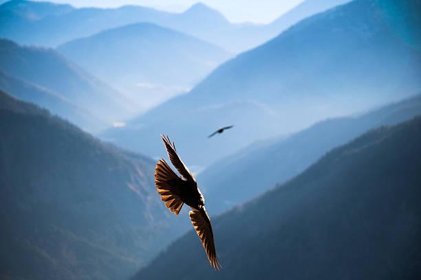 Dohle fliegt über die Berge von Bayern – Foto