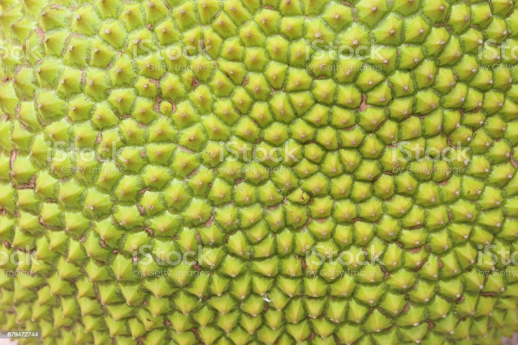 Jackfruit has a lot of spikes, both fruit. royalty-free stock photo