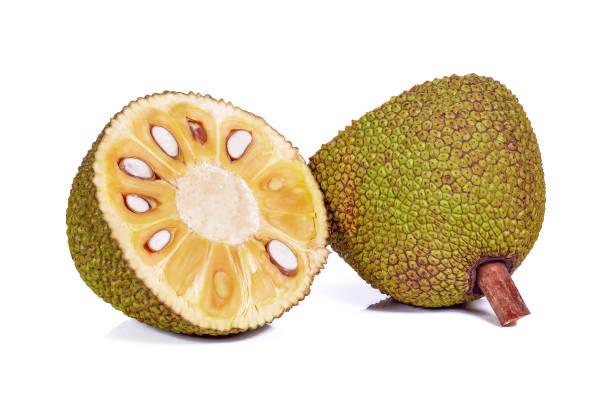 jackfrucht isoliert auf weißem hintergrund - jackfrucht stock-fotos und bilder