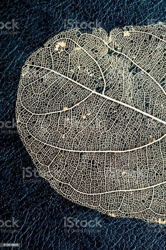 Jackfruit leaf skeleton stock photo