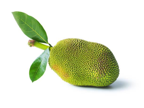 jackfrüchte. - jackfrucht stock-fotos und bilder