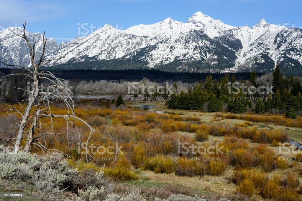 Jackson Hole, Parc National de Grand Teton photo libre de droits