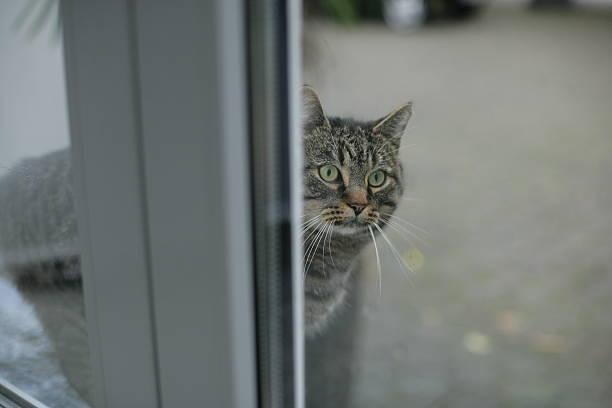 Jacky the cat stock photo
