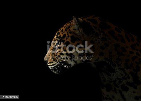 istock jaguar ( Panthera onca ) in the dark 515243907