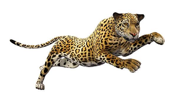 Jaguar leaps on white background picture id533533091?b=1&k=6&m=533533091&s=612x612&w=0&h=iv7mvzxgsxa1e48co8fqpahe3e7shv7uhnjdroqsyr8=