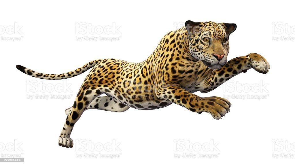 Jaguar leaps on white background stock photo