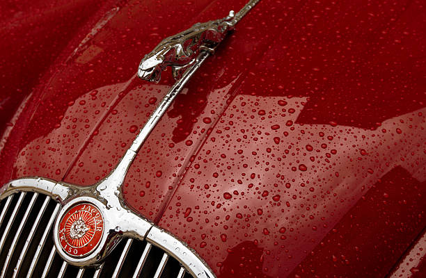 Royalty Free Jaguar Hood Ornament Pictures Images And Stock Photos