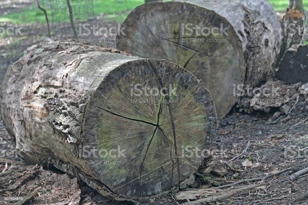 Jahresringe vom Baum stock photo
