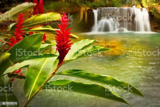 Jamaica ys falls picture id907976374?b=1&k=6&m=907976374&s=612x612&h=xjrv3raa9extg8qugqv etdtoclq11nemcvc9v ywdc=
