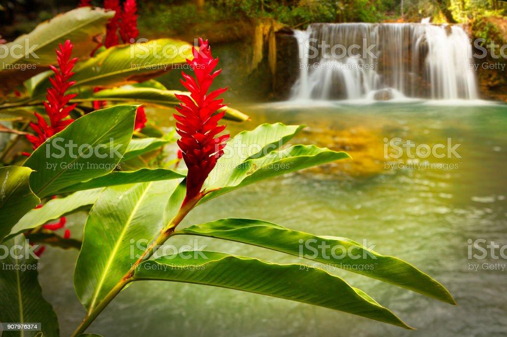 Jamaica YS Falls stock photo