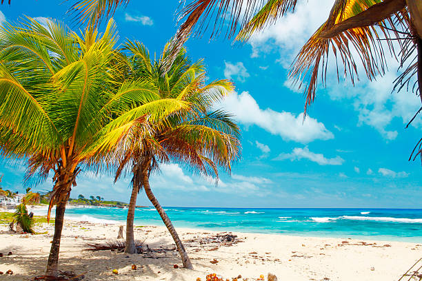 jamaican beach - jamaica stock photos and pictures