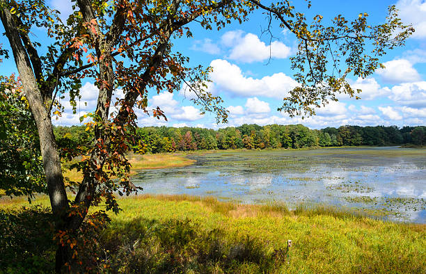 Jamestown Audubon Center and Sanctuary stock photo