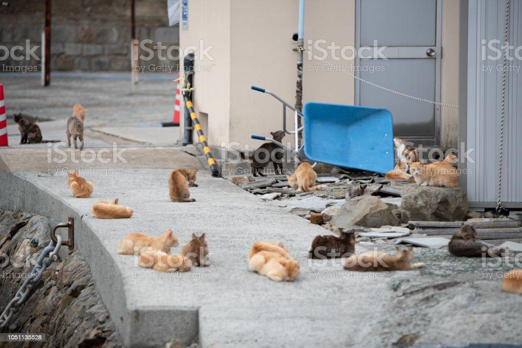 Japan Cat Island stock photo