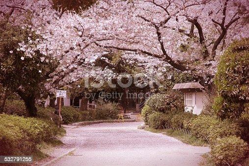 istock Japan cherry blossom 532791255