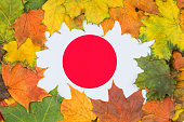 Japan flag buried in yellow maple leaves. Autumn texture.