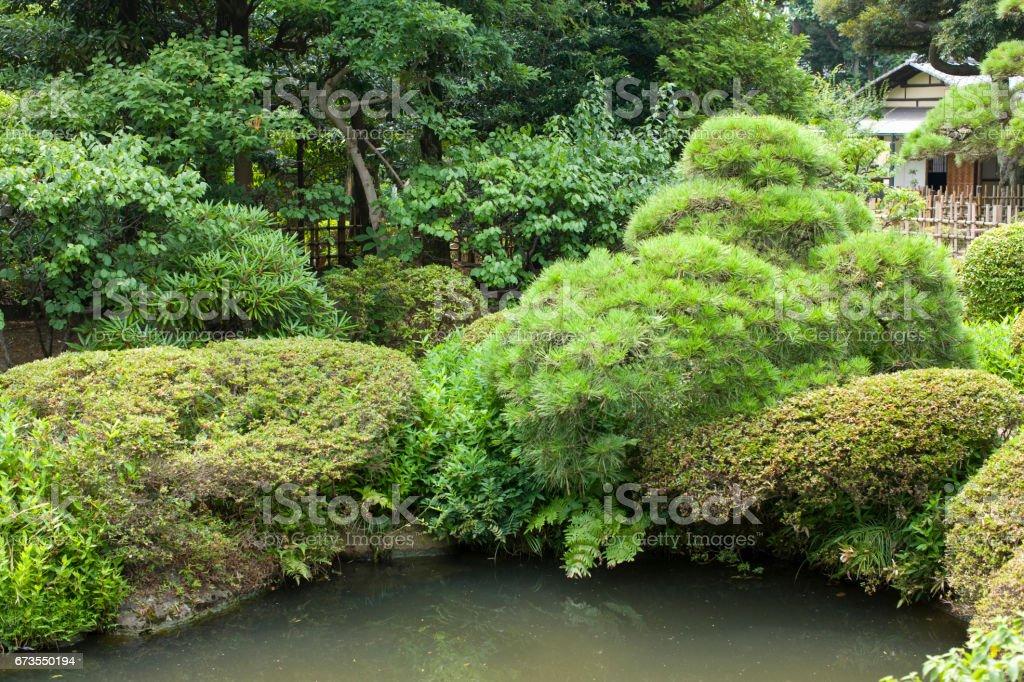 Japan garden royalty-free stock photo