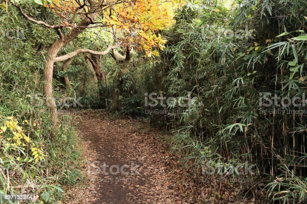 Japan hike picture id897133274?b=1&k=6&m=897133274&s=612x612&h=4vhtm4pws8 j 1lo5pi1nqvrygv123waml6fdnar7x4=