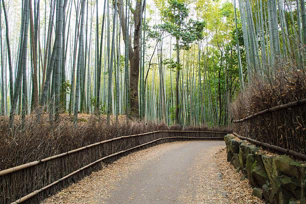Japan Kyoto Tokyo bamboo grove foto