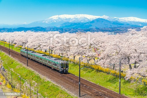Japan landscape scenic view of JR Tohoku train with full bloom of sakura and cherry blossom, hitome senbonzakura, tohoku, asia with snow mountain in spring season. Beautiful sakura spot view in japan.