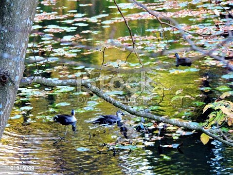 Japan. Autumn. Pond in the Park