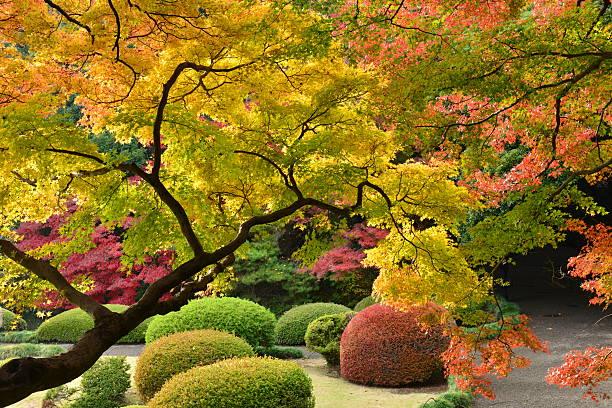 japanische herbst farben - japanischer garten stock-fotos und bilder